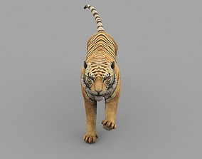 3D asset Tiger Animated Game Ready And Vfx