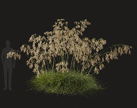 3D model Stipa Gigantea Feather Grass-06