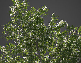 3D model 2021 PBR Common Jasmine Collection - Jasminum
