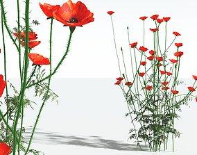 3D EVERYPlant Field Poppy 12 --20 Models--