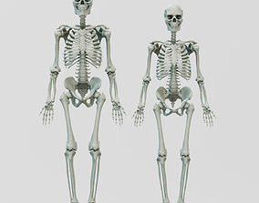 3D print model Male and Female Skeleton System