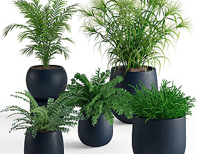 Houseplant 40 3D model