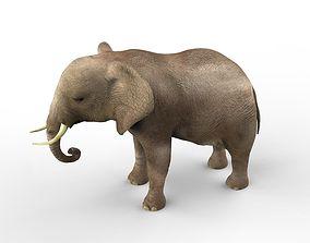 elephant Elephant middle-poly 3D
