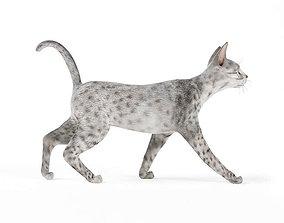 Rare Leopard Cat 3D model