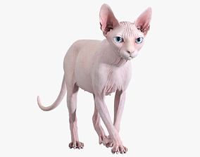 3D model character Sphynx Cat Pink Animated