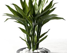 Feng Shui Lucky Bamboo Plant 3D model