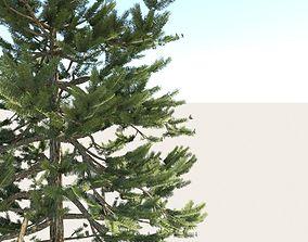 Pine Tree 3D model VR / AR ready