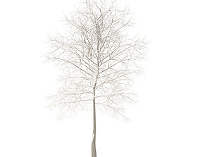 3D Sugar Maple with Snow 7point3m
