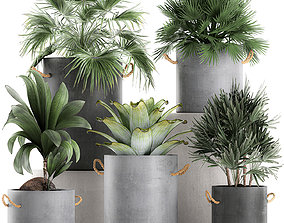 3D Plants in pots of concrete for the interior 601