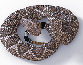 Animated Western Diamondback Rattlesnake 3D model