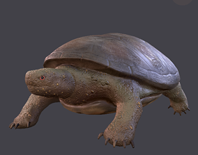 3D model game-ready Turtle