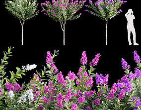 Lagerstroemia - Crepe Myrtles 3D