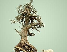 3D model Dead Bonsai Tree 5
