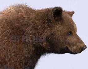 3D Bear-Maya