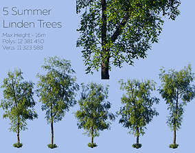 Summer Linden Trees 3D model