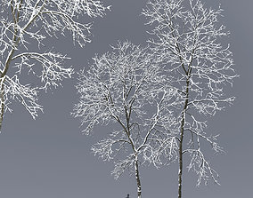 Ash-tree 02 winter H15 18m 3D