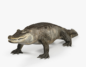 3D Alligator HD