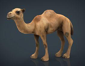 3D model Camel 2