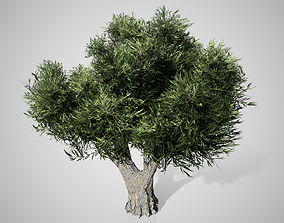 3D model African Olive Tree
