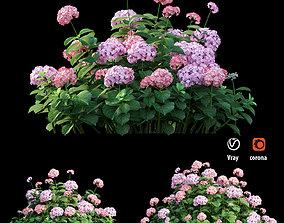 3D Plants Hydrangea set 20