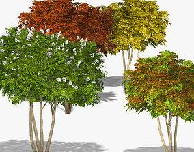 Tree Shadberry Amelanchier alnifolia 3D model