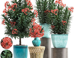 Collection Nerium oleander red 3D