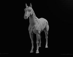 Horse-Equine Anatomy Ecorche 3D print model