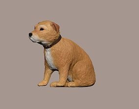 animals 3D model small Irish terrier