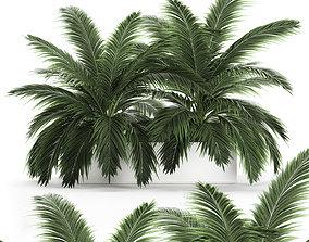 Decorative palm in a flowerpot 690 3D model