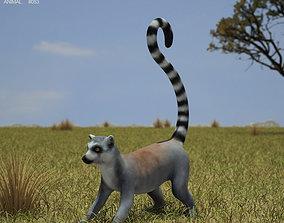 3D model Ring-Tailed Lemur Lemur Catta