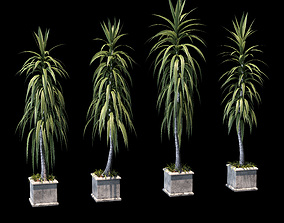 Collection of palm trees in concrete pots - 4 models