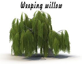 3D model Weeping willow