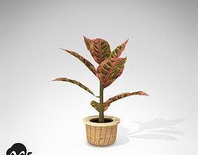 3D XfrogPlants Croton Petra
