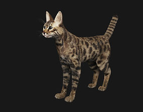 Bengal Cat 3D model rigged