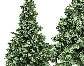 Spruce 5 3D