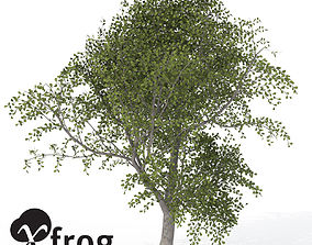 XfrogPlants Sessile Oak 3D