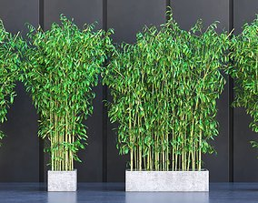 3D model Bamboo Plants in Pots