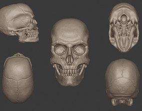 Human Skull 3D Sculpt