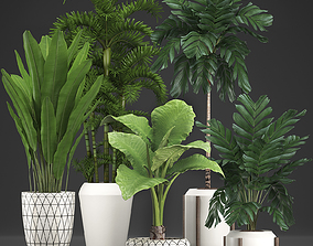 3D Collection Exotic plants 349