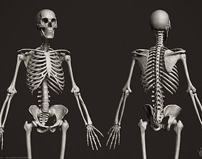 3D Human Skeleton skeletal