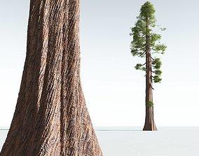3D EVERYPlant Coastal Redwood 06 --12 Models--