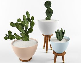 Cactus Set for decorating Your interiors 3D