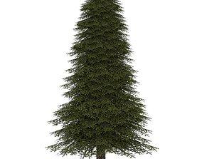 3D asset Fir Tree 2