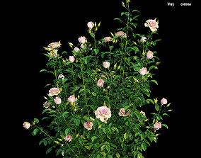3D Plant rose set 08