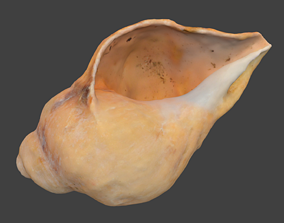 3D model Pointed Spiral Seashell Photoscan