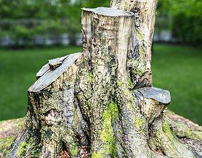 Big Tree stumps 3D model