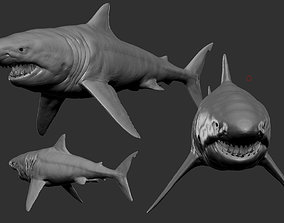 shark 3D model game-ready animals