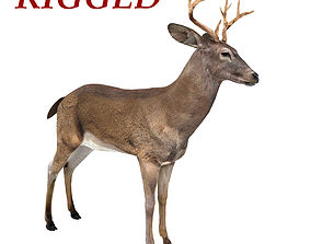 Deer Rigged 3D asset game-ready