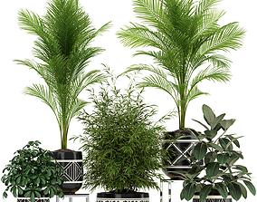 3D Plants collection 181