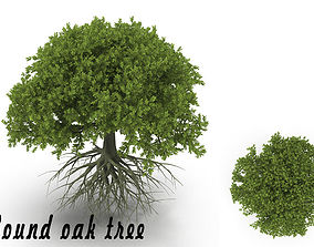 Oak tree 3D Models | CGTrader